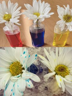 Add some food coloring to small cups of water, and put a fresh cut flower in each cup of water. Observe the color changes over the next day or Cut Flowers, Food Coloring, Summer Fun, Color Change, Homeschool, Cups, Fresh, Table Decorations, Water