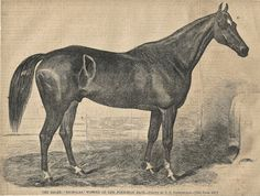 1860's Engraving found in Harpers Weekly from a Horses Ephemera Grab Bag.  (Horses Ephemera Grab Bags available at http://www.uncannyartist.com/products/horses-ephemera)