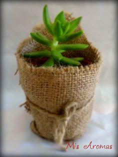 Souvenir - suculenta en maceta de barro envuelta en tela de arpillera natural. Incluye instrucciones de cuidado.