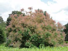 wat een mooie boom/struik!