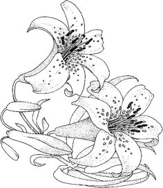lilies flowers to color | Lily Flower Coloring Pages - Flower Coloring Page