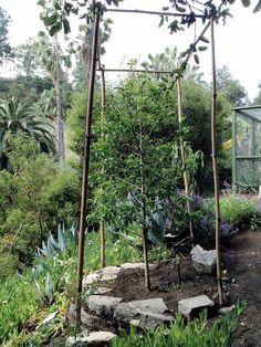 Lush Garden Fruit Tree Trees Edible