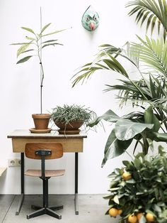 Tropical indoor plants | houseplant styling | plants in my office workspace | sweet little retro desk and industrial style chair.