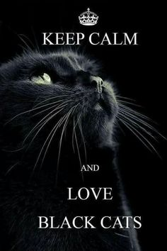 Black CATS ARE Awesome Beautiful Wonderful Pets!!!! Do Not Believe the Ignorance or Superstition,s from the Dark Ages!!!!
