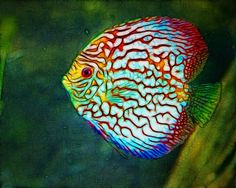 Here a list of animals that start with D. #discusfish #animalsthatstartwithd