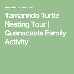 Tamarindo Turtle Nesting Tour | Guanacaste Family Activity