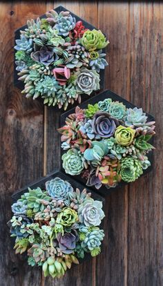 This listing is for one modern hexagon vertical garden filled with locally grown succulents! Ask about combined shipping!  Approx.