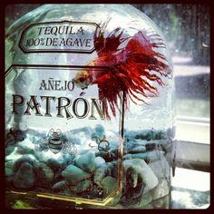 28 Everyday Items Turned into Fish Tanks and Aquariums . Patron Bottle Crafts, Alcohol Bottle Crafts, Alcohol Bottles, Patron Bottles, Tequila Bottles, Liquor Bottle Lights, Wine And Liquor, Empty Liquor Bottles, Liquor Store