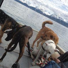 Doggy barge