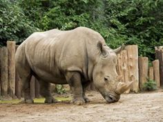 Wildlife Sanctuaries in Nagaland, India, Forests in Ngaland