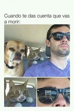 """35 Random Memes That'll Put A Dumb-Looking Smile On Your Face - Funny memes that """"GET IT"""" and want you to too. Get the latest funniest memes and keep up what is going on in the meme-o-sphere. Funny Internet Memes, Funny Memes, Hilarious, Jokes, Funny Cats, Funny Animals, Tierischer Humor, Laughing Dog, Funny Images"""