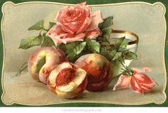 Натюрморты Catherine Klein. Цветы и фрукты.