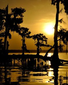 See photos of Louisiana, including New Orleans, Baton Rouge, scenes of Mardi Gras, and other views of life on the bayou. Louisiana Swamp, New Orleans Louisiana, Beautiful Sunset, Beautiful World, Mississippi, Nature Pictures, Cool Pictures, Wonderful Places, Beautiful Places