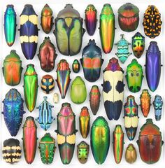 Brightly coloured Bugs