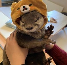 ok but why are otters so cute Baby Animals Pictures, Like Animals, Fluffy Animals, Cute Little Animals, Cute Funny Animals, Animals And Pets, Cute Dogs, Otters Cute, Cute Ferrets