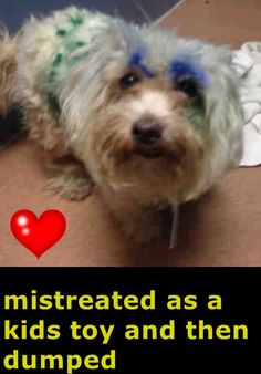 ~ Animal ID #A1636064 ‒ I am a Female, White Miniature Poodle and Maltese. The shelter thinks I am about 2 years old. I have been at the shelter since February 25, 2015. San Diego County Department of Animal Services Central Region - San Diego ‒ (619) 767-2675 5480 Gaines Street San Diego, CA https://www.facebook.com/OPCA.Shelter.Network.Alliance/photos/pb.481296865284684.-2207520000.1425346173./784038595010508/?type=3&theater