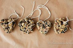 Bird Seed Feeders