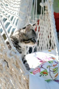 Cute Kittens, Cats And Kittens, Big Cats, Cat Background, Christmas Cats, Christmas Sweets, Funny Animal Pictures, Beautiful Cats, Crazy Cats