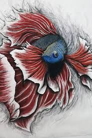 betta painting - Google Search
