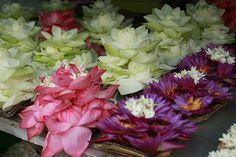 lotus flowers, Kandy, Central Province, Sri Lanka (www.secretlanka.com)