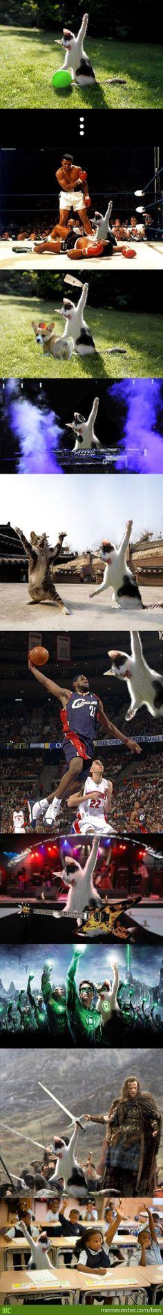 Un gato haciendo gatadas