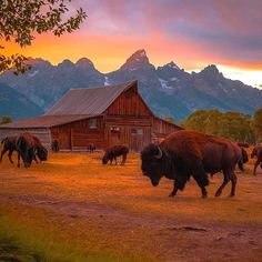 Destinations, Nature Animals, Great Photos, Wyoming, Travel Inspiration, Sunrise, Instagram, Sunsets, Wayfarer