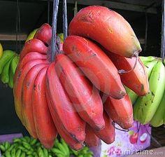 Platano Rojo El plátano rojo es muy apreciado en muchos lugares del mundo por su hermosa coloración y el sabor delicioso con un ligero toque de frambuesa. Su pulpa es blanca-cremosa con un tono pálido rosado o anaranjado. Es más pequeño y más dulce que el banano Cavendish. El plátano rojo está listo para ser consumido cuando su piel adquiere un color rojizo-marrón casi púrpura. Healthy Fruits And Vegetables, Fruit And Veg, Fresh Fruit, Banana Fruit, Banana Plants, Exotic Fruit, Tropical Fruits, Bonsai Apple Tree, Funky Fruit