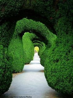 Walking through this garden with these architectural inspired Green Arches. #Garden #Green #Architecture