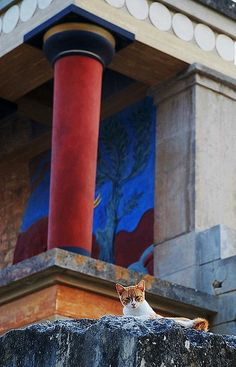 GREECE CHANNEL | the cat under the gate of the sun...#Knossos #palace, #Crete (#Greece) http://www.greece-channel.com/
