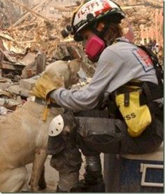 Dog Heroes of September - A tribute to America's Search and Rescue Dog Search And Rescue Dogs, Dog Search, World Trade Center, Animal Heros, We Will Never Forget, Sad Day, Pit Bull, Real Hero, God Bless America