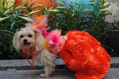 Spring Flowers Orange Pink Couture Designer Dog Dress by Orostani Couture. orostanicouture.com