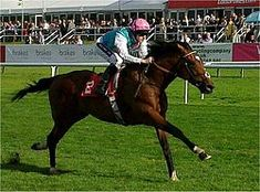Frankel, an undefeated United Kingdom racehorse.  He won 14 of 14 starts, and was rated 147 in 2012 by Timeform, the highest in the organization's history. He is also ranked the best racehorse ever assessed by the World Thoroughbred Racehorse Rankings Committee.
