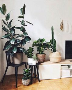 The Botanical Trend: Best Indoor Plants Design - These 21 plant-filled homes are unbe-leaf-able - House Plants Decor, Plant Decor, Bedroom Plants, Bedroom Decor, Plants For Room, Bedroom Ideas, Living Room Plants, Interior Plants, Interior Design