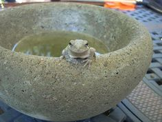 Easy to make concrete bowls I have to try this
