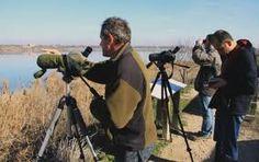 Ornitologia a l'Estany d'Ivars i Vila-sana