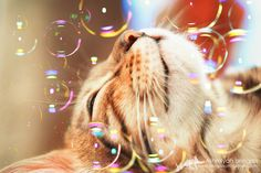 Bengal Cat: Arkadia with bubbles