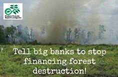 SPEAK OUT!  Tell Big Banks To STOP FINANCING FOREST DESTRUCTION!  The fastest-growing cause of deforestation across the tropics is the massive growth of palm oil plantations. One company -- Wilmar International -- produces nearly half of the world's palm oil.  Among the biggest U.S. financiers of Wilmar are the nation's largest banks, pension funds & assets managers. To save the world's forests, we need to get our money out of palm oil.  PLZ SIGN & SHARE!