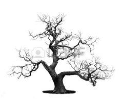 arbre mort: Arbre mort isolé sur blanc