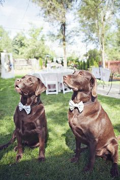 we could put colt's dog in a bow tie at our wedding, but then we'd have to worry about him eating all our guests alive.