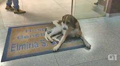 """""""O GRITO DO BICHO"""": Vídeo mostra cão que ficou em porta de hospital po..."""