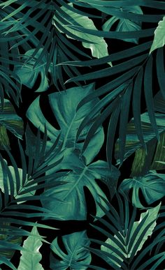 Tropical Jungle Night Leaves Pattern # 1 # Window C . Tropical Jungle Night Leaves Pattern # 1 # Window C . Leaves Wallpaper Iphone, Plant Wallpaper, Tropical Wallpaper, Green Wallpaper, Pastel Wallpaper, Aesthetic Iphone Wallpaper, Flower Wallpaper, Aesthetic Wallpapers, Windows Wallpaper
