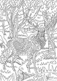 This Page Features A Beautiful Deer Hiding Deep In The Woods Take Your Coloring Pencils And Start Bringing It To Life