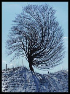Sometimes we cannot see the things that change us whispered the wind to the tree.