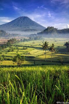In the green fields of Bali, Indonesia.