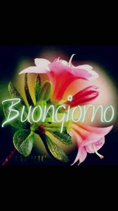 Italian Greetings, Italian Memes, Good Mood, Good Morning, Lily, Barbarella, Dolce, Den, Snoopy