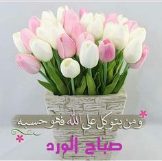 Good Morning Arabic, Good Morning Roses, Good Morning Cards, Good Morning Greetings, Good Morning Good Night, Morning Wish, Morning Pictures, Good Morning Images, Beautiful Morning Messages