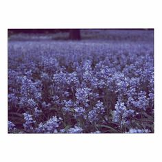 KESS InHouse Ann Barnes 'Bluebell Forest' Purple Flowers Dog Place Mat, 13' x 18' * Review more details here (This is an amazon affiliate link. I may earn commission from it)