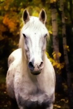 white horse - Carrie Groseclose Photography Psd: Let's go riding! Beautiful Horses, Animals Beautiful, Cute Animals, Pretty Horses, Orange Braun, Big Friends, Types Of Animals, White Horses, All Gods Creatures