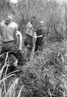 ~ Vietnam War, big ass snake!!  #VietnamMemories