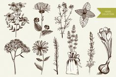 Vector set of vintage herbs illustration and seamless pattern. Ink hand drawn sketch collection.